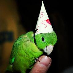 bday bird